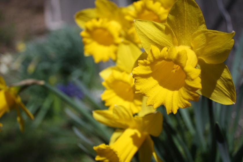 2016 03 29 BIKE FLOWERS_8971